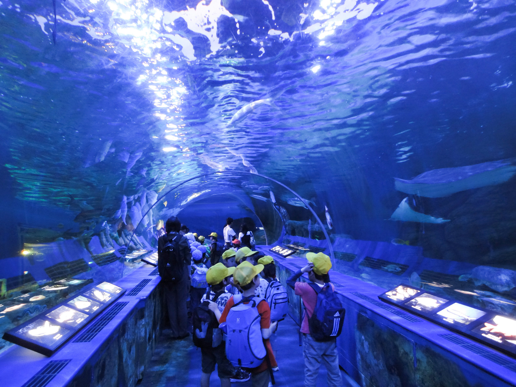 10 Best Aquariums In and Around Tokyo | Hub Japan
