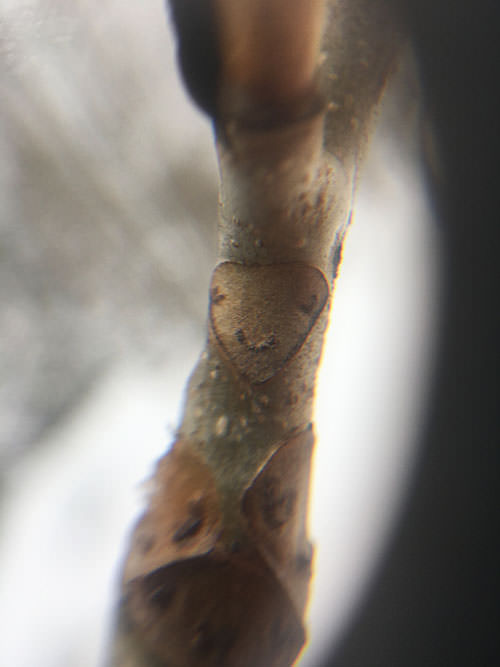 """Cute """"face"""" on a branch, seen by the magnifying glass."""