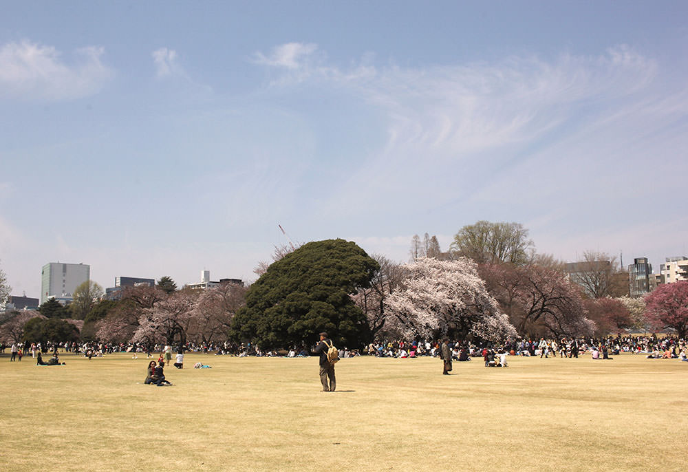 People doing Hanami in a field at Shinjuku Gyoen National Park