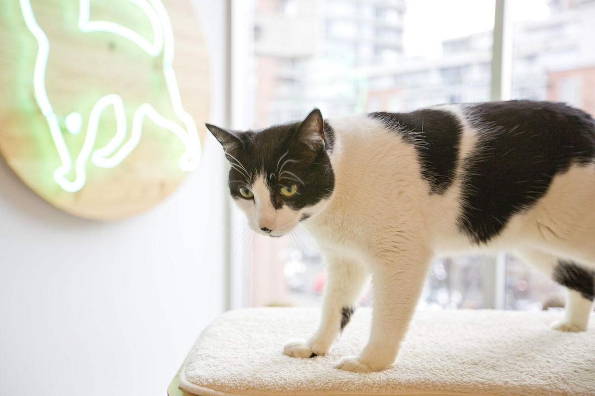 Play with cats at a cat cafe in Tokyo