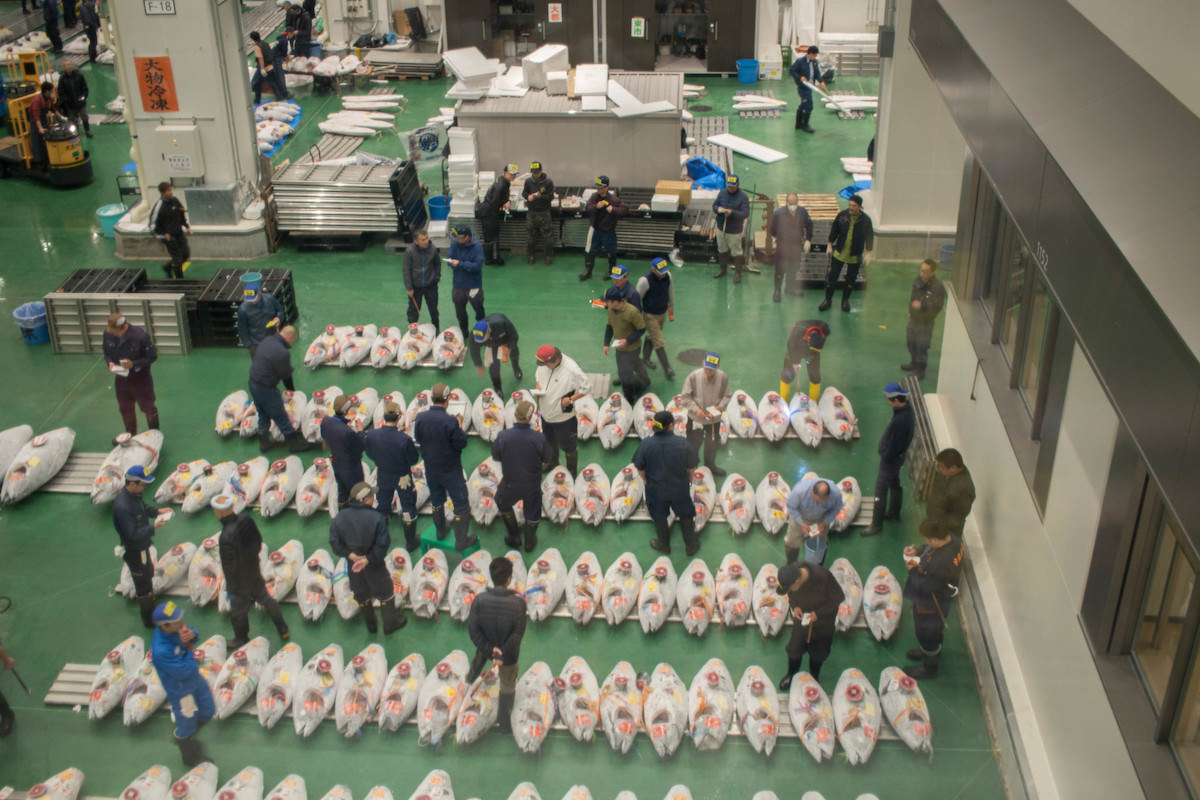 Watch tuna auction at Toyosu Market